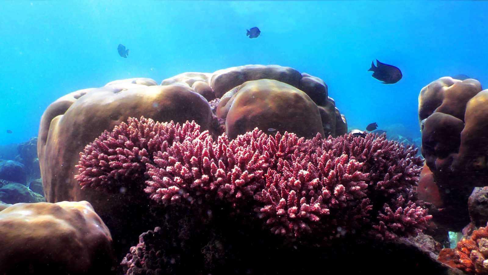 Cheval Blanc Randheli diving 2